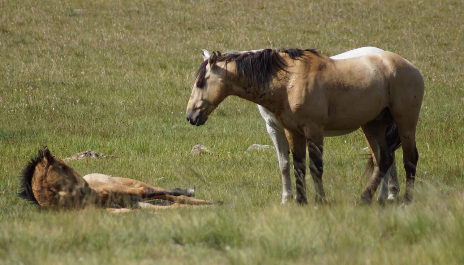 Cyndy Warnier Photography Mare and Foal